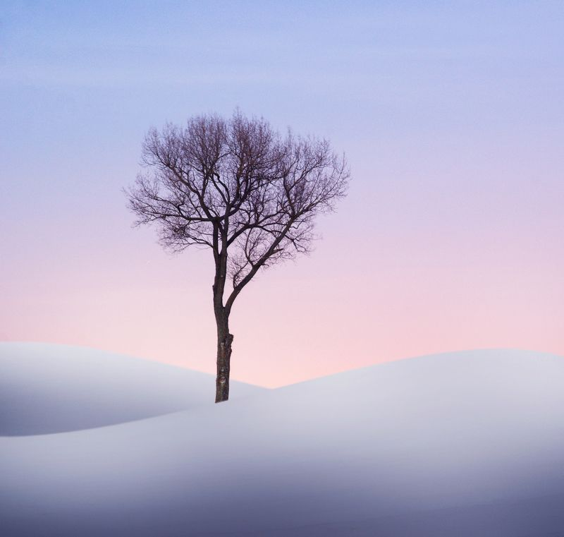 winter, minimalism, tree, snow,  *photo preview