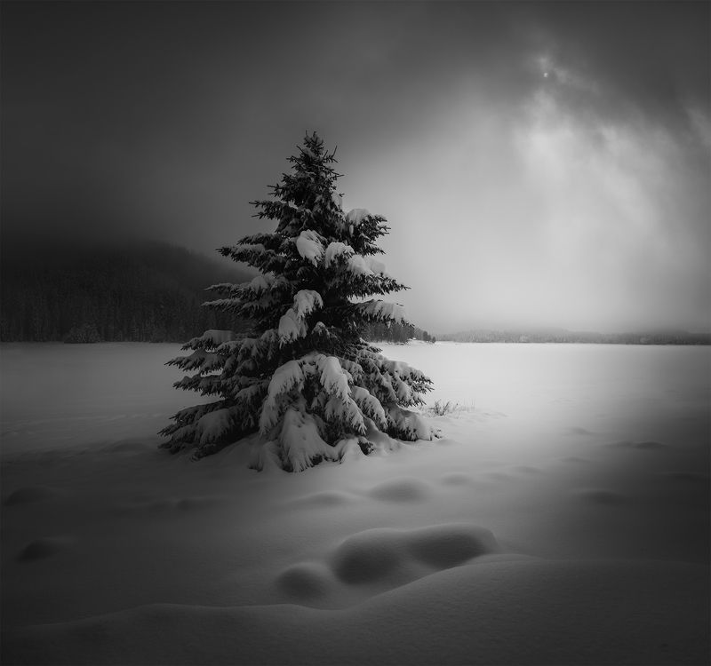 black&white, landscape, пейзаж, winter Dramatic morningphoto preview