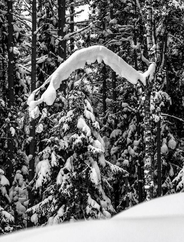 Лесной портал.photo preview