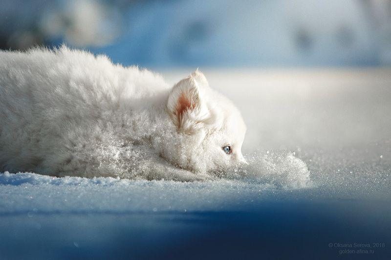 снег, зима, щенок, собака, белый, развлечение, мимими Буль-буль!photo preview