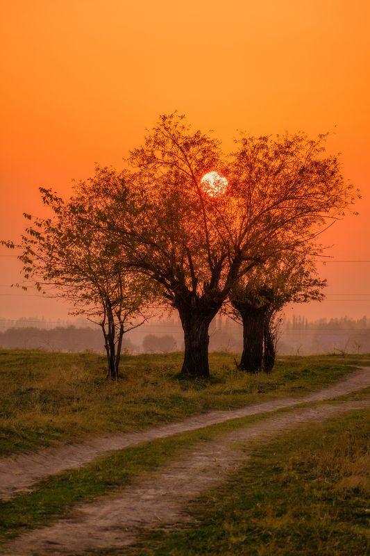 закат, деревья, пейзаж, природа, село, проселок, дорога, sun, landscape, tree Солнце в ветвяхphoto preview