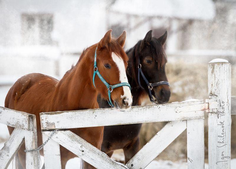 зима, лошадь, деревня photo preview