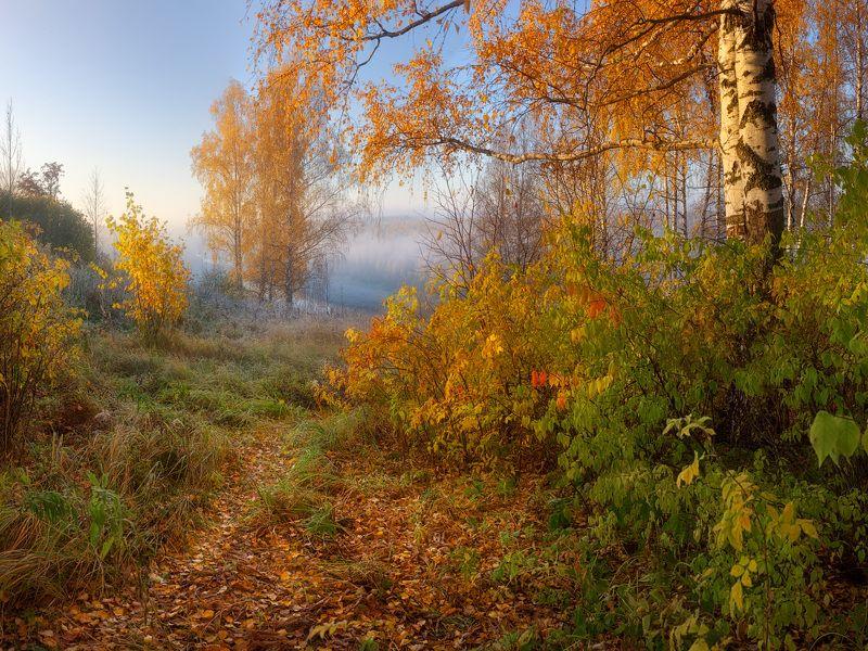осень, лес, туман Осенняя палитраphoto preview