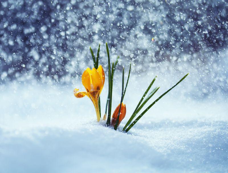 весна...photo preview