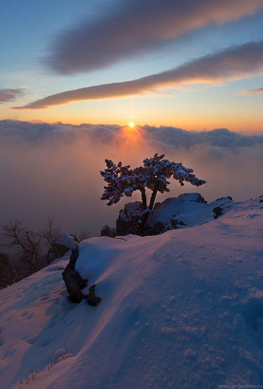 крым, ялта, зима, снег, ай-петри, фотограф крым, фотограф ялта, пейзажи крыма, сосна, дерево, туман Крымская зимаphoto preview