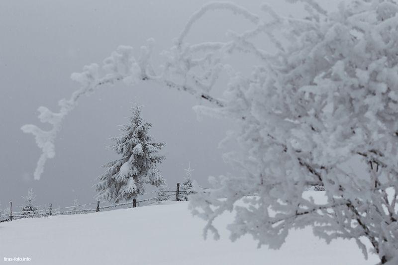 карпаты, зима, туман холодная красотаphoto preview