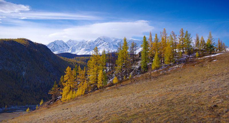 алтай, горы, хребет, северо-чуйский, южно-чуйский, осень, пейзаж, валерий_чичкин Осень в горахphoto preview