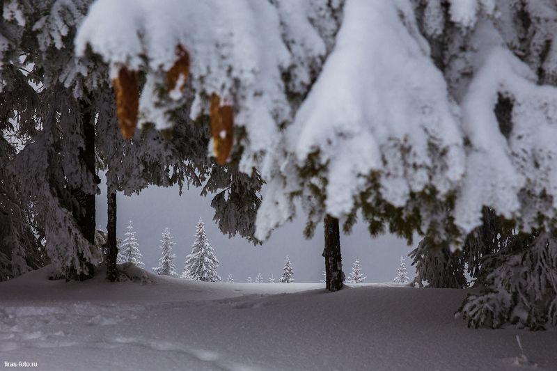 карпаты, зима, снег, лес, украина Лучше, чем телевизорphoto preview