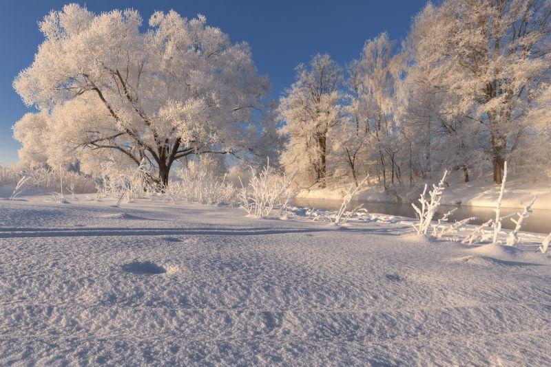 мороз, солнце, снег, свет, иней В золотом сиянье дняphoto preview
