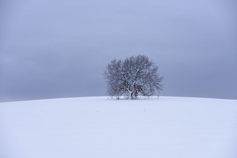 winter, snow, tree, landscape,calm ***photo preview