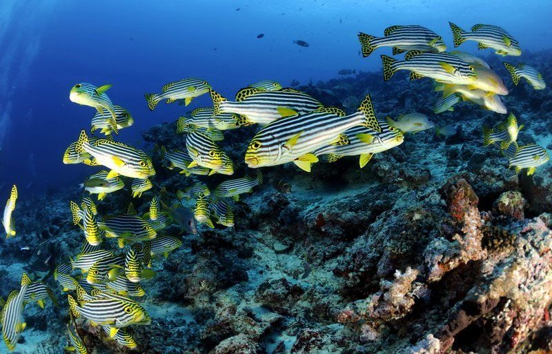 Мальдивские зарисовкиphoto preview