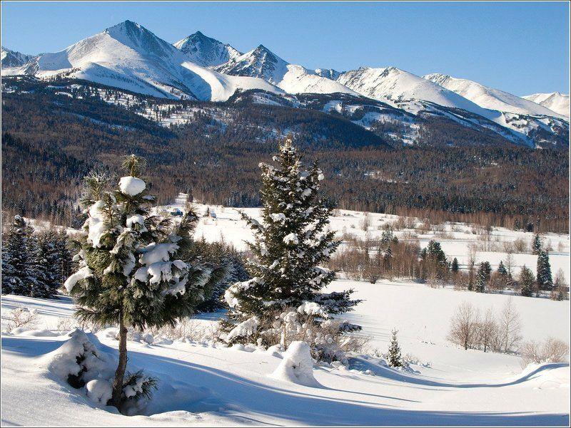 зима, снег, горы, леса, кедр, пихта Горы на исходе февраляphoto preview