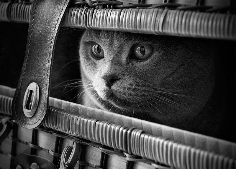 Dark cat in Darkphoto preview