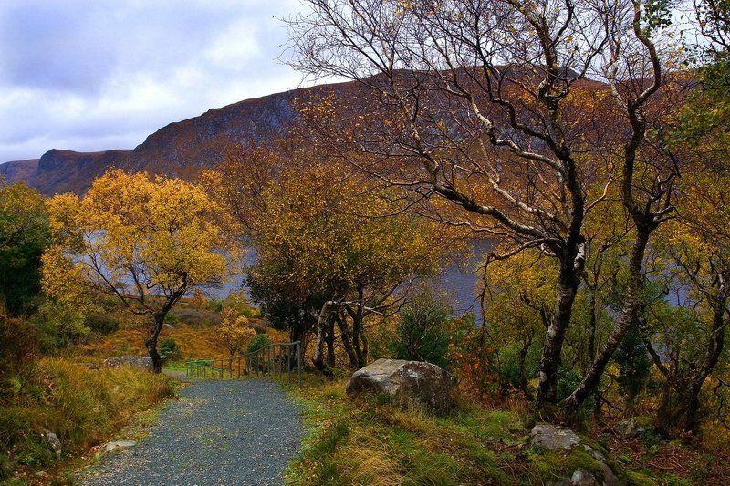 ирландия, осень, ***photo preview
