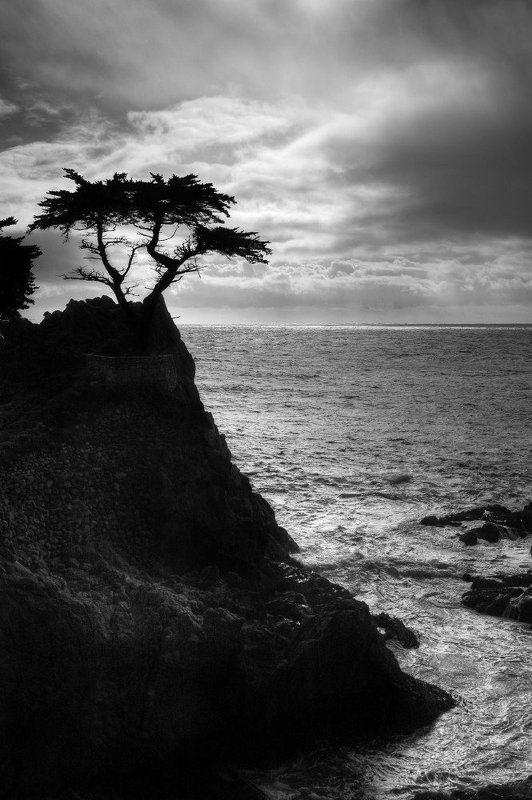 кипарис, калифорния, океан Одинокий кипарисphoto preview