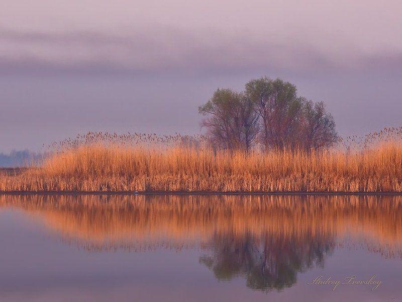 Фиолетовое утро.photo preview