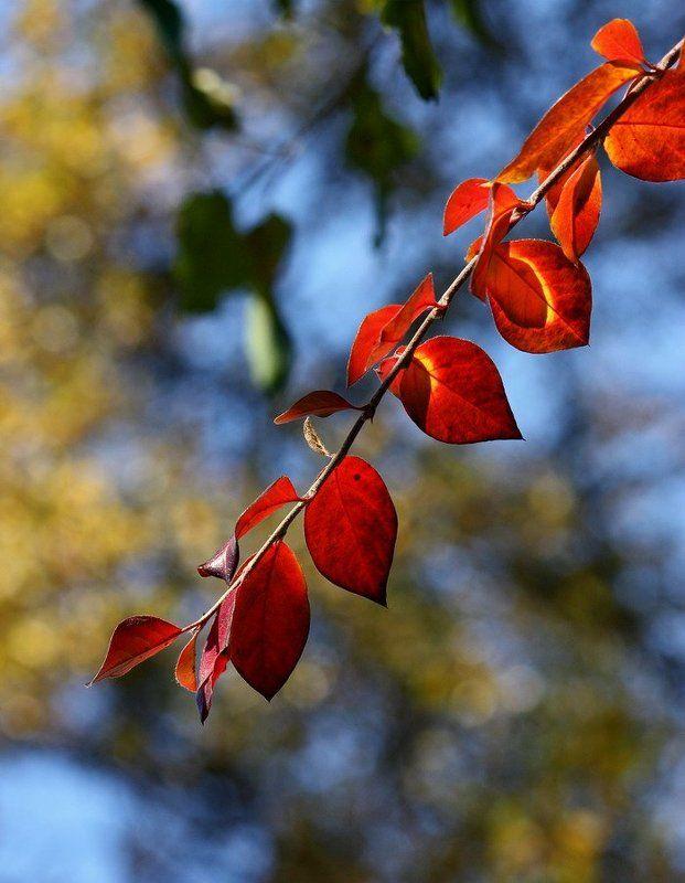 Осеннии листочкиphoto preview