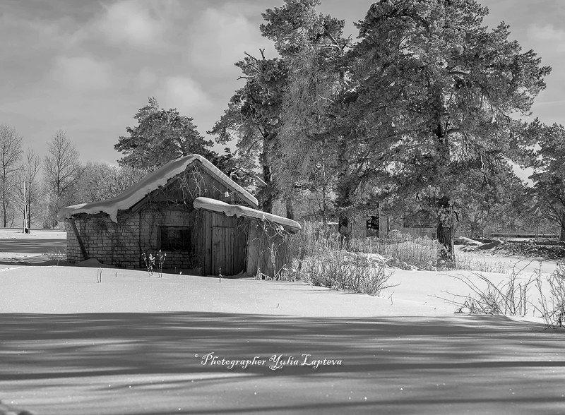 черно-белое,природа,зима,февраль,россия,bw \
