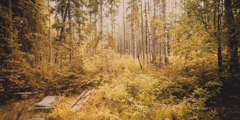 деревья, пейзаж, природа, лес Лесphoto preview
