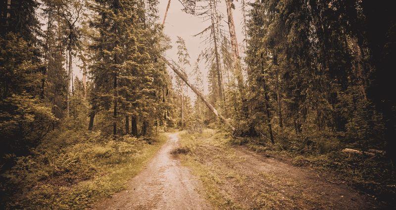 пейзаж, природа, , дорога, деревья, лес Лесная дорогаphoto preview