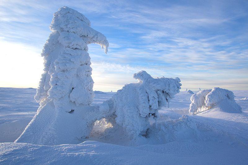 Zimowe wariacjephoto preview