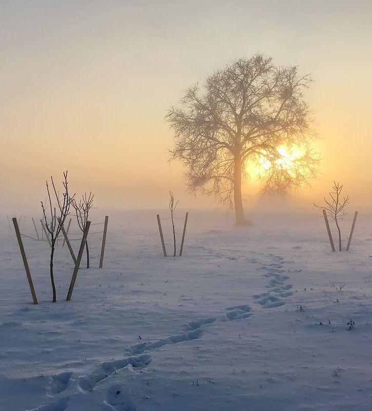 зима,свет,минск ... где-то под Минском ...photo preview