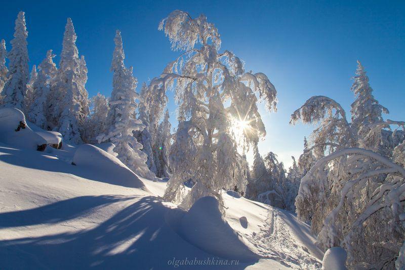 зима, мороз, солнце Мороз и солнце, день чудесный!photo preview