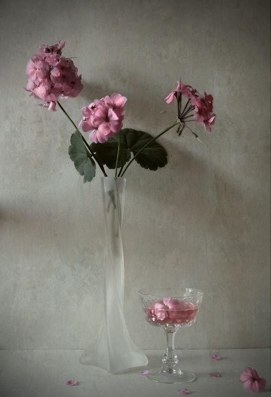 Geranium, wine, vase, flowers Geranium and winephoto preview