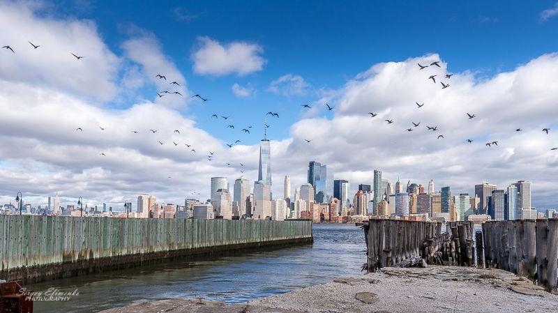 newyork, skyline, birds, cityscape New York skilinephoto preview