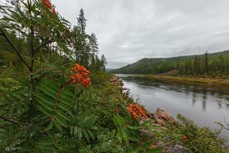 южная якутия, большой нимныр, лето, река, природа, рябина Рябина краснаяphoto preview