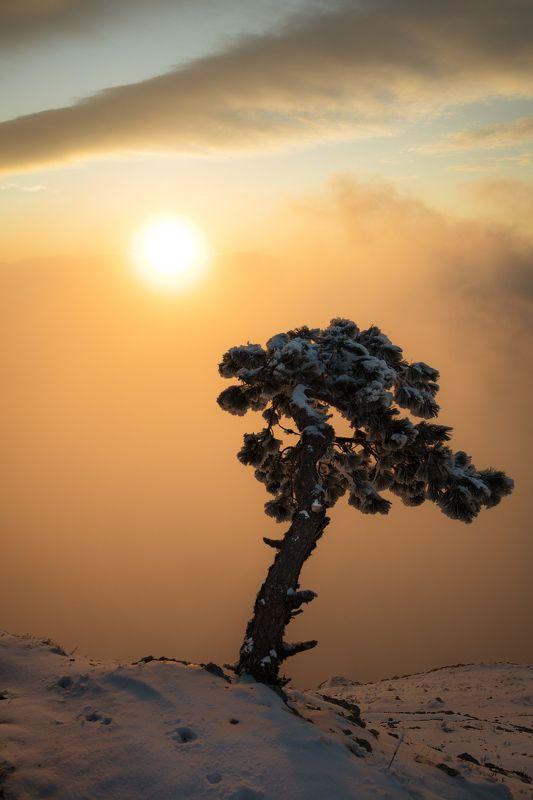утро, пейзаж, восход, солнце, облака, дерево, крым, Февральским утром.photo preview