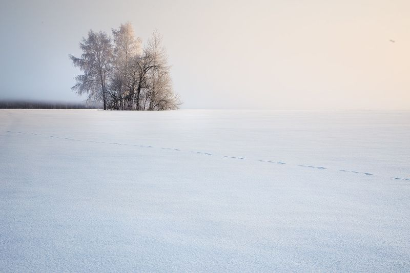 winter, frost, water, ice,snow, мороз, зима, утро, пейзаж. лед, иней Белая пустыняphoto preview