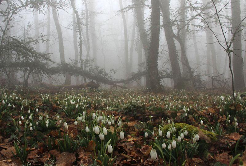 Подснежники, туман Весна на Аю-Дагеphoto preview