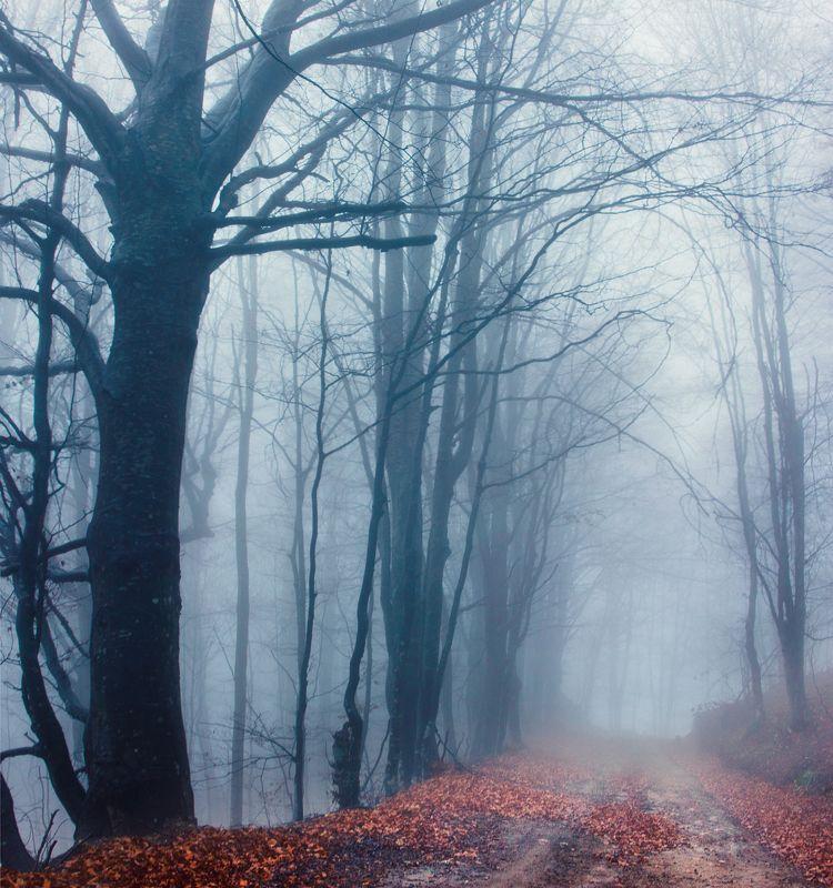 природа, горная дорога, бук, лес, дерево, осень, мокрый, дождливый, туманный, сербия,nature, mountain road, beech, forest, tree, autumn, wet, rainy, foggy, serbia, Autumn around usphoto preview