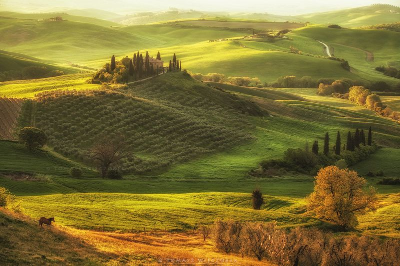 italia, italy, tuscany, belvedere, spring, light, sunrise, horse, green, colours, shadow, landscape, beautiful Belvederephoto preview