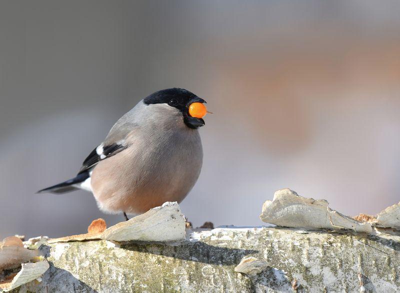птицы,природа,зима, Большому куску....photo preview