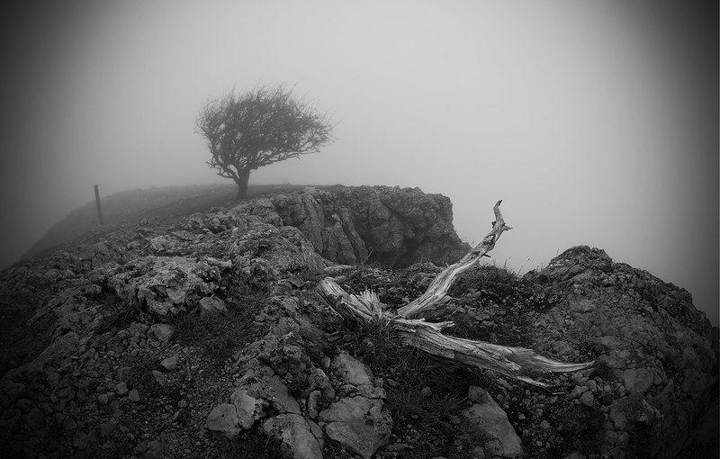 пейзаж, дерево, туман, обрыв \