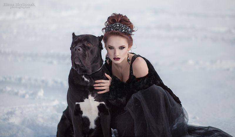 dark queen, crown, snow, winter, fairy tale, темная королева, корона, снег, зима, сказка dark queenphoto preview