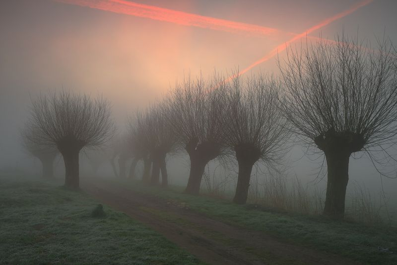 road, light, mist, willows, morning, sunrise, mood, The roadsphoto preview