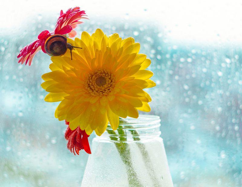 улитка, герберы, март, гелиос Весна на подоконнике))photo preview