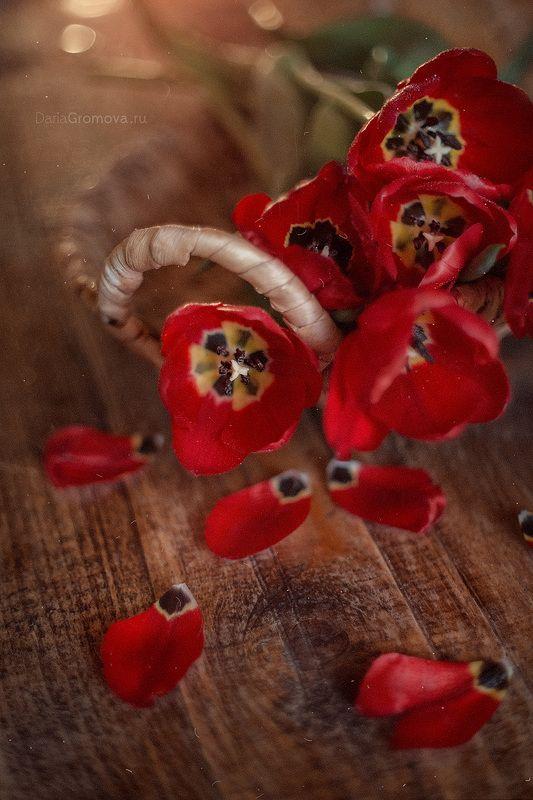 Любимые тюльпаныphoto preview