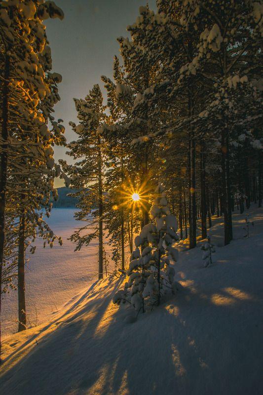 пейзаж, природа, закат, солнце, свет, лес, деревья, север, сугробы, снег, сосны, река Сквозь препятствияphoto preview