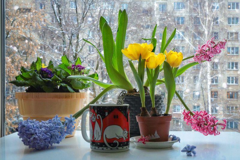 коты,цветы,натюрморт,весна,зима, О мартовских котах и ожидании весны...photo preview