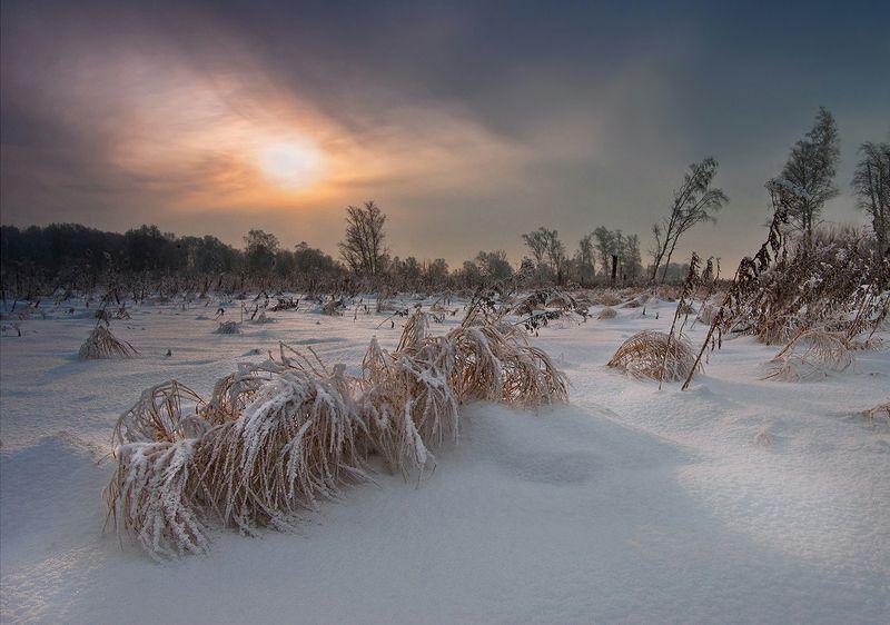 зима, вечер, пейзаж, снег, трава, свет, солнце, небо, валерий_чичкин На исходе зимнего дняphoto preview