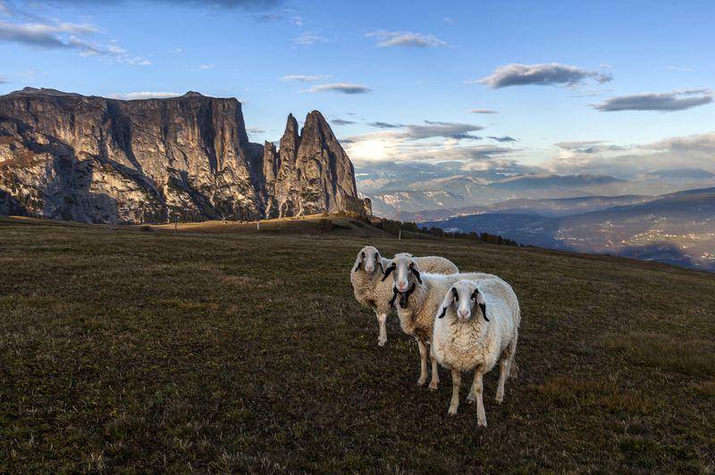 italy, dolomites, sudtirol, mountains, photo preview