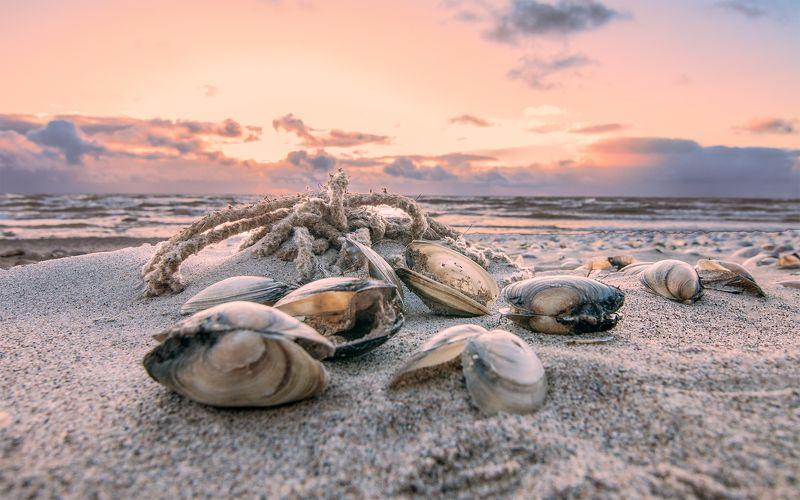 mussel,sea,sky,sunset Seashorephoto preview