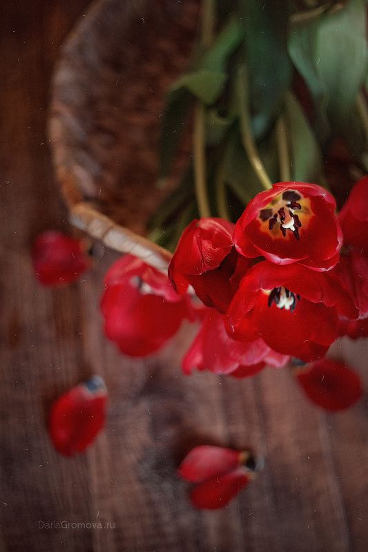 Весенние цветы photo preview