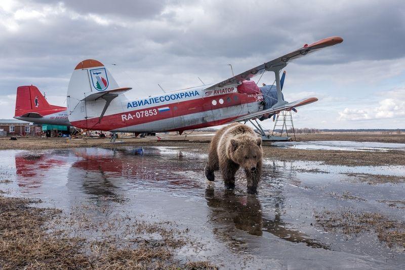 медведь, авиамедведь, самолет, аэродром После полетаphoto preview