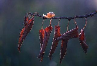 Листопад, листья грустно шелестят