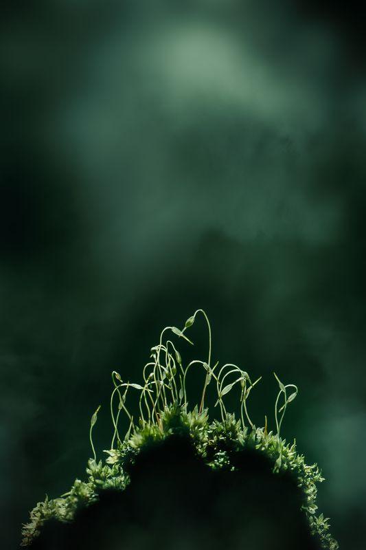 весна, macro, зеленый ...веснаphoto preview
